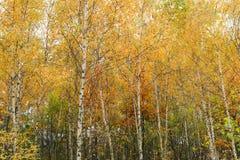 Hojas multicoloras del árbol Imagen de archivo libre de regalías