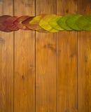 Hojas multicoloras hermosas en los tableros de madera Fotografía de archivo libre de regalías