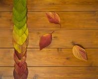 Hojas multicoloras hermosas en los tableros de madera Fotos de archivo libres de regalías