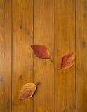 Hojas multicoloras hermosas en los tableros de madera Fotografía de archivo