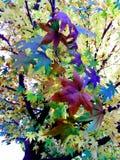 Hojas muy coloridas foto de archivo