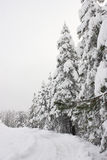Hojas nevadas en invierno Fotografía de archivo