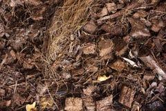 Hojas o plantas muertas Fotografía de archivo