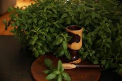 Hojas orgánicas de la menta verde fresca en el arbusto con el mortero y la maja imagenes de archivo
