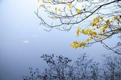 Hojas otoñales del amarillo en ramas de árbol costeras Imagen de archivo