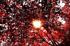 Hojas otoñales rojas Imagen de archivo libre de regalías