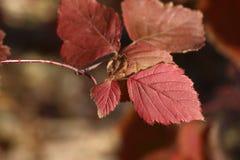 Hojas pardas en otoño temprano en la estepa fotografía de archivo libre de regalías