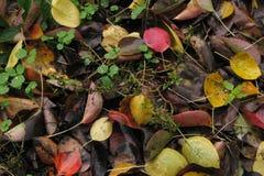 Hojas putrefactas del otoño Foto de archivo libre de regalías
