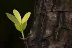 Hojas que brotan de los árboles grandes DOF bajo Imagenes de archivo
