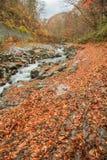 Hojas que caen con la corriente natural en otoño en el valle de Nakatsugawa - Yama, Fukushima, Japón fotos de archivo libres de regalías