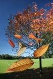 Hojas que caen de la caída del otoño Imágenes de archivo libres de regalías
