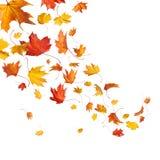 Hojas que caen del otoño Fotografía de archivo libre de regalías