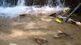 Hojas que caen en el agua