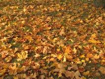 Hojas que caen en otoño Imágenes de archivo libres de regalías
