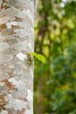 Hojas que crecen el tronco de árbol Imágenes de archivo libres de regalías