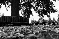 Hojas que mienten en el piso delante de un árbol Imagen de archivo