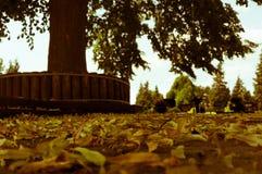 Hojas que mienten en el piso delante de un árbol Fotos de archivo