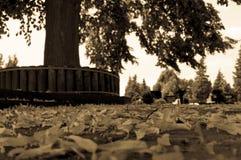 Hojas que mienten en el piso delante de un árbol Foto de archivo