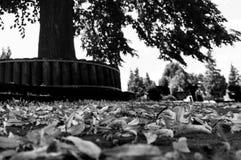 Hojas que mienten en el piso delante de un árbol Imagen de archivo libre de regalías