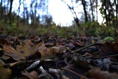 Hojas que mienten en la tierra en un bosque Fotografía de archivo libre de regalías