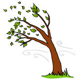 Hojas que soplan del viento del árbol Foto de archivo libre de regalías