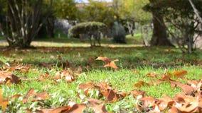 Hojas que soplan del viento el otoño almacen de video