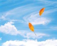 Hojas que soplan en el viento Fotografía de archivo