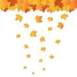 Hojas realistas del otoño Fotografía de archivo