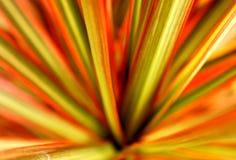 Hojas rectas coloreadas Fotografía de archivo libre de regalías