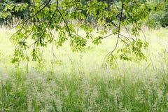 Hojas retroiluminadas en bosque Fotografía de archivo