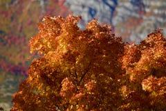 Hojas retroiluminadas en montañas sobre Provo, Utahi Fotografía de archivo