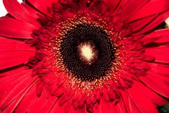 Hojas rojas de la flor y del verde imagen de archivo libre de regalías