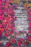 Hojas rojas de la hiedra en una pared de piedra fotografía de archivo libre de regalías