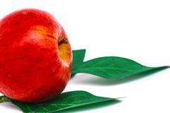 Hojas rojas de la manzana y del verde fotografía de archivo