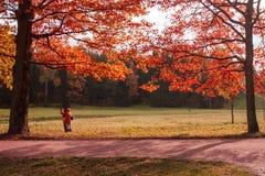Hojas rojas en el parque Pavlovsk, Rusia Foto de archivo