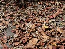 Hojas secadas, caidas en un pavimento Foto de archivo libre de regalías