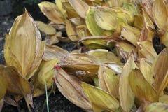 Hojas secadas de la planta Foto de archivo libre de regalías
