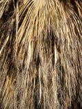Hojas secadas del anahaw Foto de archivo