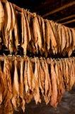 Hojas secadas del tabaco Fotografía de archivo