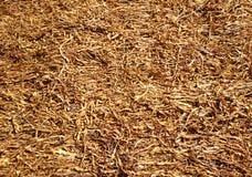 Hojas secadas del tabaco Foto de archivo libre de regalías