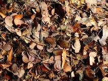 Hojas secadas en color marrón imagenes de archivo