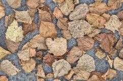 Hojas secadas en fondo del suelo Fotos de archivo libres de regalías