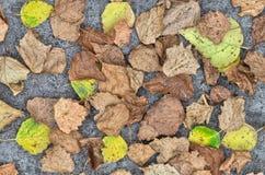 Hojas secadas en fondo del suelo Fotografía de archivo