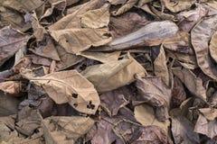 Hojas secadas en la tierra Imágenes de archivo libres de regalías