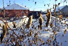 Hojas secadas en rama contra el contexto borroso del paisaje rural del invierno Imagen de archivo