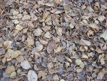 Hojas secadas en superficie del parque Imagenes de archivo