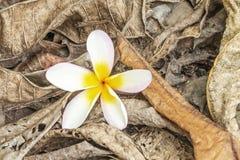 Hojas secadas y flores decaídas descompuestas naturalmente Imagenes de archivo