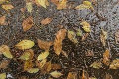 Hojas secas caidas después de una tormenta de la lluvia Imágenes de archivo libres de regalías