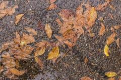 Hojas secas caidas después de una tormenta de la lluvia Imagen de archivo libre de regalías