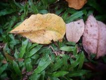Hojas secas caidas en la hierba verde Foto de archivo